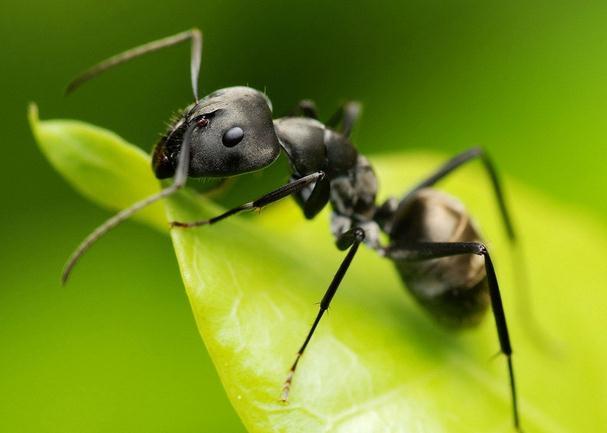 蚂蚁懂音乐?用爬行轨迹来证明